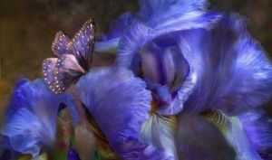 flor devioleta
