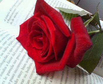 libro-y-rosa-2