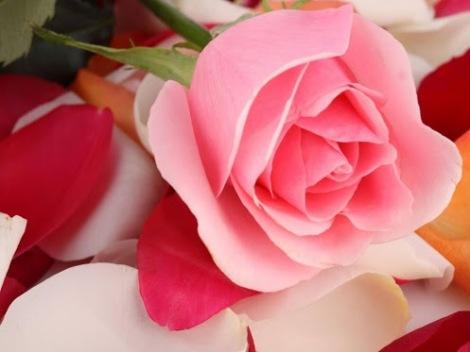 roseas