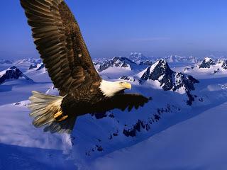 Aguila_Volando