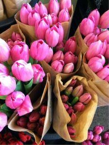Hermosos tulips de primavera