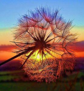 Que al amanecer, os amanezcan los deseos . ;)