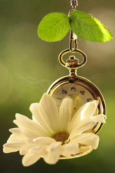 tiempo mi tiempo